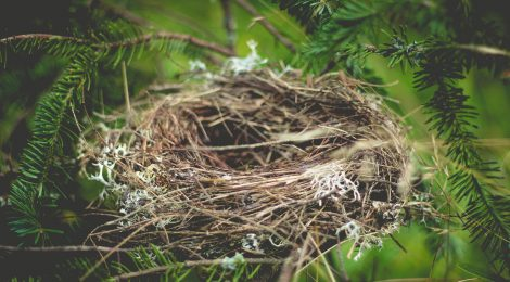 When the Nest Falls
